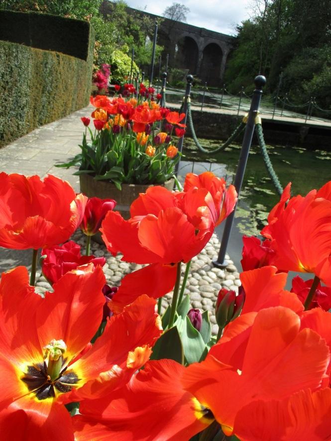 Tulips Kilver Court
