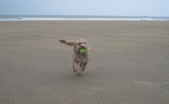 Bertie dog